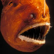 What Color Is An Orange Anglerfish National Geographic