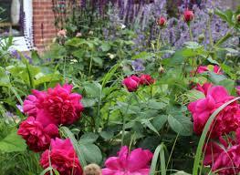 family garden design projects lancashire garden designer lindsay clegg garden design