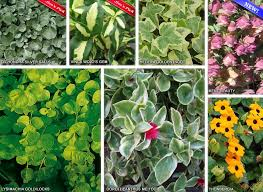 Flowers For Window Boxes Partial Shade - annual flowers garden design rochester mn nursery