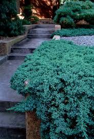 julie moir messervy design studio brookline japanese garden