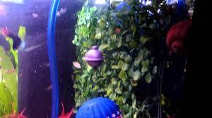 aerating ornament balloon navigator aquarium fish tank