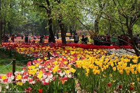 Beijing Botanical Garden 香山边的植物园 Picture Of Beijing Botanical Garden Beijing