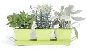 Indoor Herb Garden Kit Sherbet Green Metal Herb Kit Urban Farmer