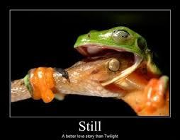 Still A Better Lovestory Than Twilight Meme - still better love story than twilight