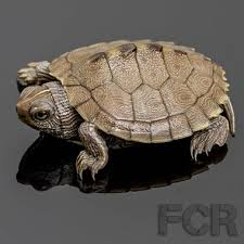 map turtle cb baby mississippi map turtle for sale choice reptiles