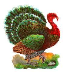 Thanksgiving Bird Antique Images Vintage Thanksgiving Turkey Digital Bird Clip