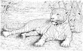 tiger coloring pages coloringsuite com