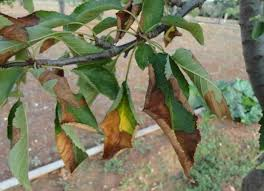 Plant Pests And Diseases - gardens pests and diseases to look out for department of