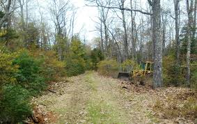 Delaware forest images Community illegal dumpsite cleanup program pennsylvania jpg