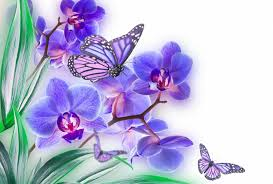 orchid butterfly list flower color wallpaper 2500x1690 563453