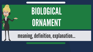 what is biological ornament what does biological ornament