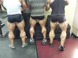 Guys Calf - this guys don t mind doing calves calves in the