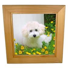 Dog Home Decor by Photos On Tiles For Home Decor U0026 Unique Gift Ideas Pacifica Tile