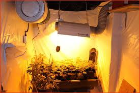 chambre de culture cannabis complete chambre de culture cannabis unique électricité et mesures de