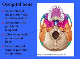Floor Of The Cranium The Skeleton Chapter Ppt Video Online Download