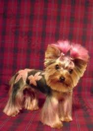 joypia yorkshire haircuts 246 best groomers do it doggystyle images on pinterest dog