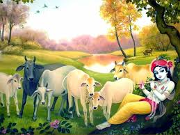 lord krishna and holy cows