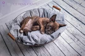 cani in cerca di casa cucciolo cerca casa newborn rescue monza brianza