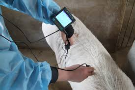 ultrasound backfat msu3 3 5 mhz agriculture and livestock shop