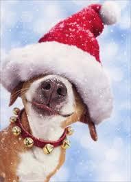imagenes navidad 2018 graciosas postales de animales para navidad 2018 animalesmascotas