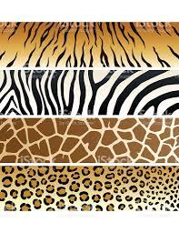 tiger print clip art vector images u0026 illustrations istock