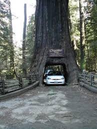 Chandelier Drive Through Tree Usa Tourist News Magazine July 2007