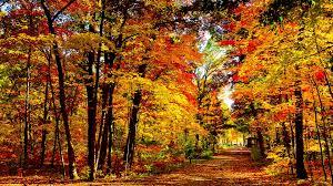 wallpaper 1920x1080 usa wisconsin wood autumn trees