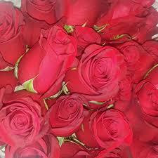 bulk roses fresh bulk freedom stems 68 to 1 00 per stem