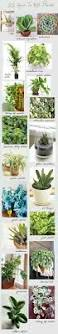 10 best houseplants that clean the air help detox your home