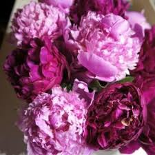 Bulk Peonies Peony For Sale Buy In Bulk U0026 Save