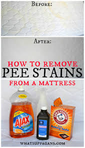 How To Lighten Stained Wood by Best 25 Urine Stains Ideas On Pinterest Pet Stain Removers