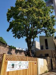 petition started to save 80 year tree at 2nd and manton