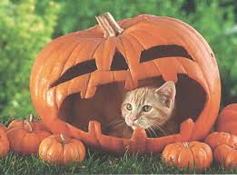 cute pumpkin wallpaper cute halloween pumpkins wallpaper holidays wallpaper better