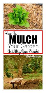 mulch for your vegetable garden life is just ducky