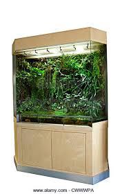 rainforest terrarium stock photos u0026 rainforest terrarium stock