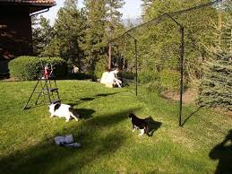 How Do You Spell Backyard Cat Fence Purrfect Cat Enclosures And Cat Fences