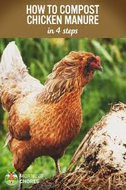 569 best raising chickens u0026 poultry images on pinterest raising