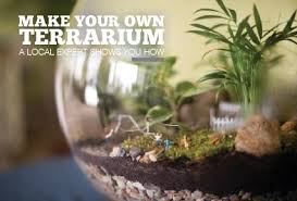 make your own terrarium 585 magazine march 2016 rochester ny