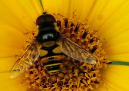 Flowers Bees Pollinate - fly pollination