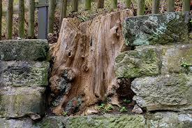 free photo log wall fence tribe tree wood free image on
