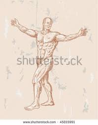 Anatomy Of Human Body Sketches Vector Illustration Of A Male Human Anatomy Standing Front