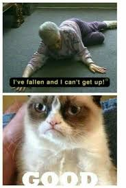 Mean Kitty Meme - grumpy cat is being mean i need a good laugh pinterest