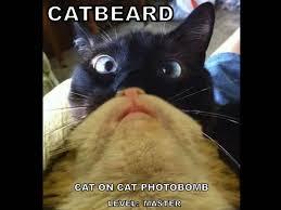 Cat Beard Meme - image 550673 cat beards know your meme