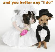 the cottage cheese dogs in weddings