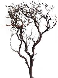 manzanita centerpieces manzanita branches 24 blooms and branches