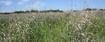planting native grasses is fertilizing native grass profitable