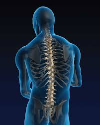 stay current with spine procedural coding aapc knowledge center