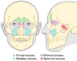 can sinus infection cause dizziness light headed sinus infection remedies without antibiotics
