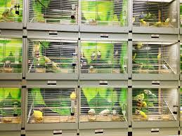 gabbie per gabbie per uccelli nel negozio di animali immagine stock