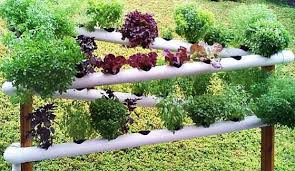 Garden Pictures Ideas Diy Pvc Gardening Ideas And Projects